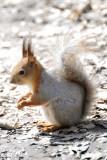 Squirrels. Spring