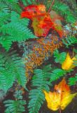 Fungi and ferns, NH