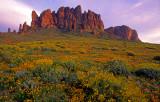 (DES 36) Mexican gold poppies and brittlebush, Lost Dutchman State Park, AZ