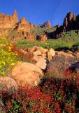(DES 35) Chuparosa and brittlebush, Lost Dutchman State Park, AZ