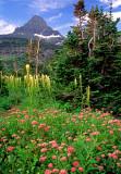 Spirea and beargrass at Logan Pass, Glacier National Park, MT
