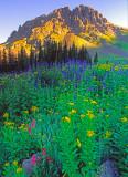 Yankee Boy Basin,  Rocky Mountains, CO