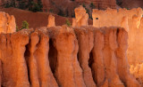 Peek-a-boo Trail Pillars, Bryce Canyon National Park. UT