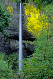 Latrouelle Falls, Columbia River Gorge, OR