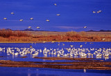 Winter at Bosque del Apache National Wildlife Refuge, NM