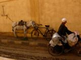 Horses & Donkeys need Care in Egypt