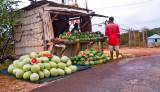 Melons At Flagaman