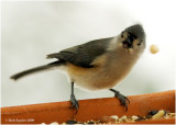 This bird was startled by my flash and dropped its prize.