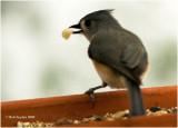 Titmice eat black oil sunflower seeds and really like peanuts.