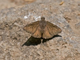 IMG_3562_butterfly_3.jpg