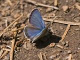 IMG_3573_butterfly_1b.jpg