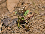 IMG_3566_butterfly_2.jpg