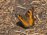 IMG_3565_butterfly_4.jpg