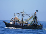 Fishing boat and Magnificent Frigatebirds in the rigging, Baja, Mexico