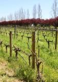 The Vineyard Vines r.jpg