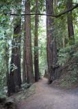 Awesome trails.jpg