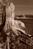 Beauty and the Erosive Beast
