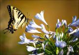 Butterfly Buffet