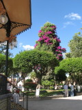 SAN MIGUEL, MEXICO  (as photographed  by my wife Reggie)