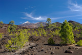 View of Teide from the Upper Pine Forest