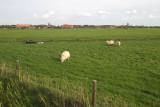 Hollum polder