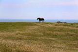 Batz horse