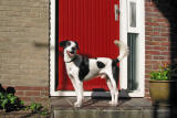 16: red house door