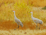 Birds -- Los Banos, November 2008