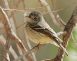 Birds -- Arizona, April 2009, identification queries