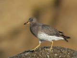 Birds -- Monterey Bay, September 2009