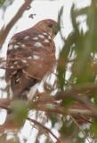 Hawk Query