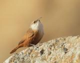 Birds -- Central California, December 2010