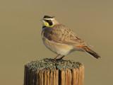 Birds -- Panoche Valley, January 2011