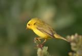 Birds - Bodega Bay, June 2004