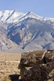 White Mtns in background