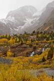 Fall colors in the East Sierra