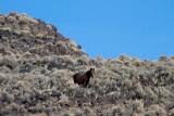 Wild Horses in the high desert
