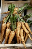 He Grows His Own Parsnips