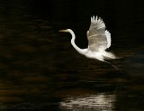 The Angel of the Everglades