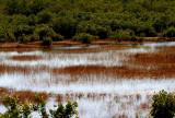 Mangrove Landscape