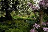 Monet Glade