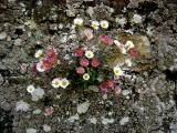 Here, Beautiful Things Grow from Cracks in the Wall