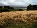 Greatham Landscape