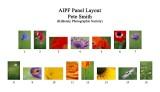 AIPF Panel Layout