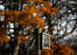 november blue  085
