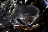 ice 076 l