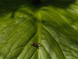 spring green 35b