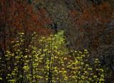 spring leaves 236
