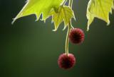 spring blush 058