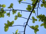 spring green 036